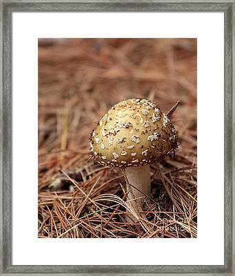 Mushroom And Pine Litter Framed Print by Kenny Glotfelty