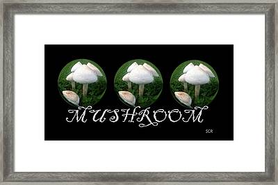 Framed Print featuring the photograph Mushroom Art Collection 2 By Saribelle Rodriguez by Saribelle Rodriguez