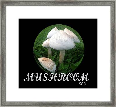 Mushroom Art Collection 4 By Saribelle Rodriguez Framed Print by Saribelle Rodriguez