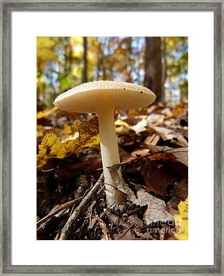 Framed Print featuring the photograph Mushroom At Walney by Jane Ford