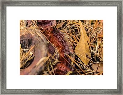 Mushroom Brown And Purple Framed Print by C Devon Brown
