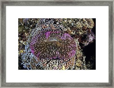Mushroom Coral Framed Print by Andrew J. Martinez