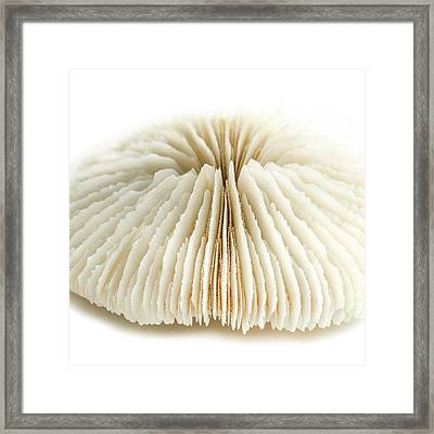 Mushroom Coral Framed Print by Science Photo Library