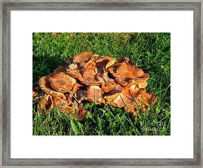 Framed Print featuring the photograph Mushroom by Deborah DeLaBarre