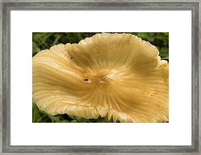 Mushroom Extravaganza Framed Print