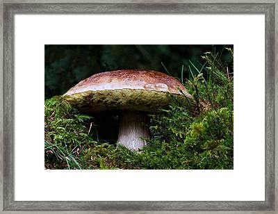 Mushroom Fairyland  Framed Print by David Dehner