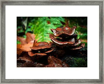 Framed Print featuring the photograph Mushroom Family Portrait by Haren Images- Kriss Haren
