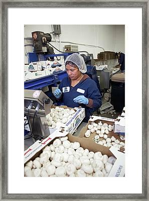 Mushroom Farm Framed Print by Jim West
