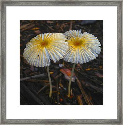 Mushroom Flowers Framed Print