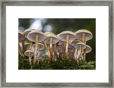 Mushroom Forest Framed Print