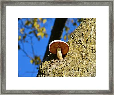 Framed Print featuring the photograph Mushroom In A Tree by Ally  White