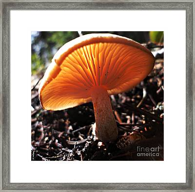 Framed Print featuring the photograph Mushroom by Janice Westerberg