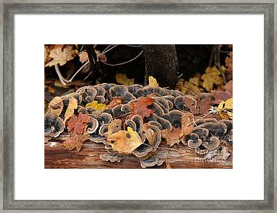 Framed Print featuring the photograph Mushroom Log by Ron Chilston