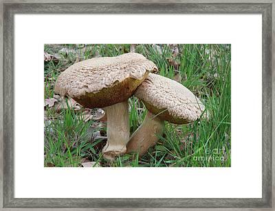 Mushroom Love Framed Print