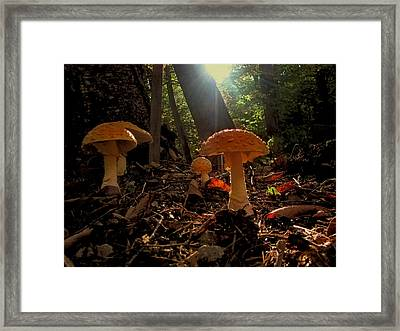 Framed Print featuring the photograph Mushroom Morning by GJ Blackman