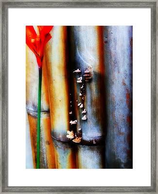Mushroom On Bamboo 2 Framed Print