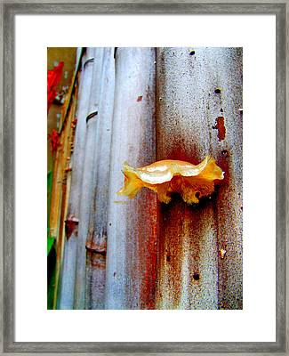 Mushroom On Bamboo Framed Print