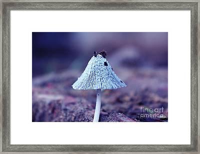 Mushroom Framed Print by Rashpal Singh