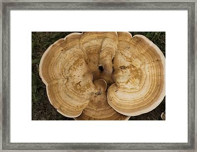 Mushroom Sculpture Framed Print