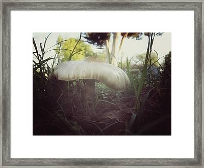 Mushroom Framed Print by Snow  White
