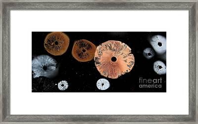 Mushroom Spore Prints Framed Print