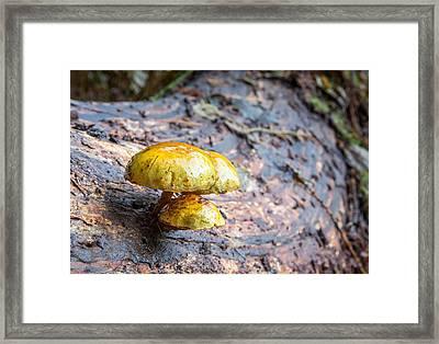 Mushroom Time Framed Print