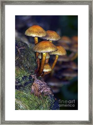 Mushrooms Aglow Framed Print