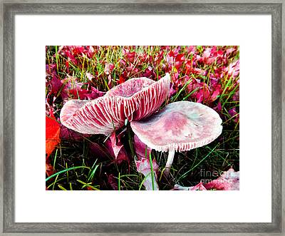 Mushrooms And Autumn Leaves Framed Print