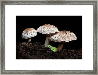 Mushrooms And Company Framed Print by Angie Vogel