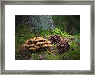 Mushrooms And Pine Cones On The Forest Framed Print
