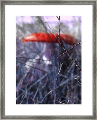 Mushrooms Contain Deadly Magic Framed Print by Steve Taylor