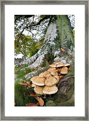Mushrooms Growing At The Base Of A Tree Framed Print by John Short