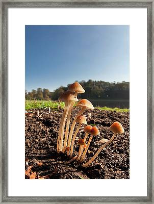 Mushrooms Growing Out Of The Soil Framed Print