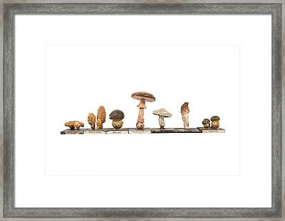 Mushrooms, Historical Model Framed Print by Science Photo Library