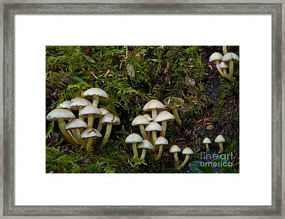 Mushrooms In The Oregon Coast Range Framed Print by William H. Mullins