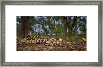 Mushrooms In The Woods #2 Framed Print by Nikolyn McDonald