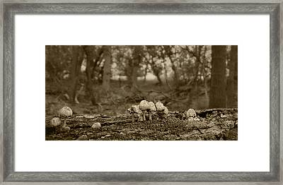 Mushrooms In The Woods Framed Print by Nikolyn McDonald