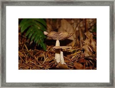 Mushrooms Framed Print by Jeff Swan