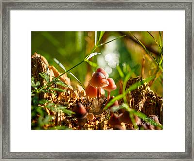 Mushrooms On A Decaying Stump Framed Print