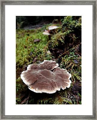 Mushrooms On A Stump Framed Print by Steven Valkenberg