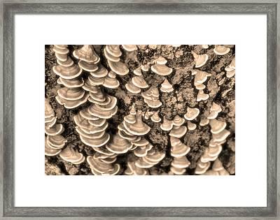 Mushrooms On A Tree Framed Print