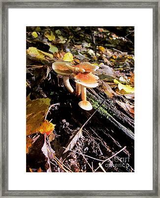 Mushrooms On Log Framed Print by Linda Marcille
