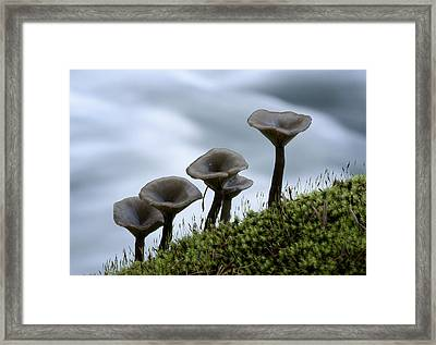 Framed Print featuring the photograph Mushrooms On Moss by Betty Depee