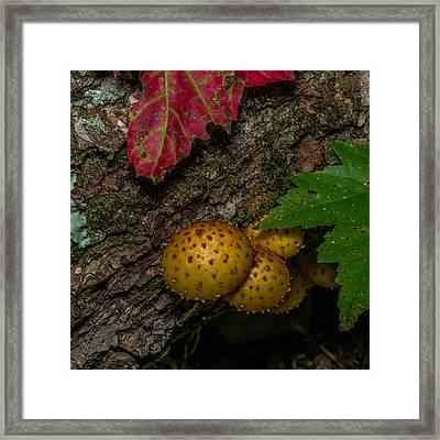 Mushrooms On The Forest Floor Framed Print