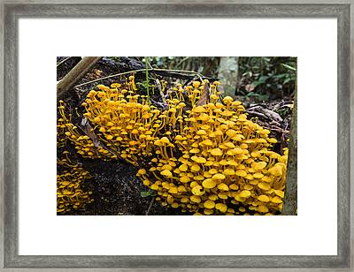 Mushrooms On Tree Trunk Panguana Nature Framed Print by Konrad Wothe