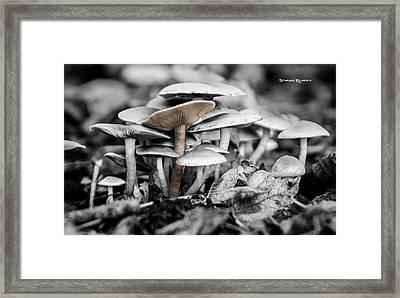 Framed Print featuring the photograph Mushrooms by Stwayne Keubrick