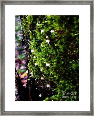 Framed Print featuring the photograph Mushrooms by Vanessa Palomino