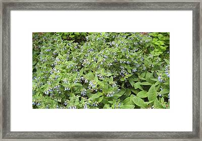 Music In The Bush Framed Print