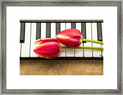 Musical Interlude Framed Print by Edward Fielding