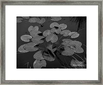 Framed Print featuring the photograph Muskeg Pond by Laura  Wong-Rose